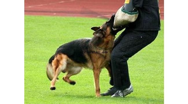 Koruma Köpek Eğitimi Süresi Ne Kadar