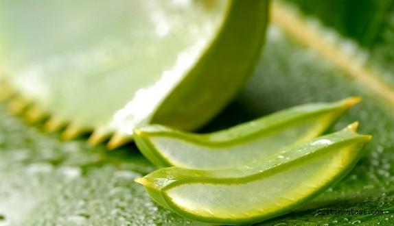 Aloe Veranın İnanılmaz Faydaları